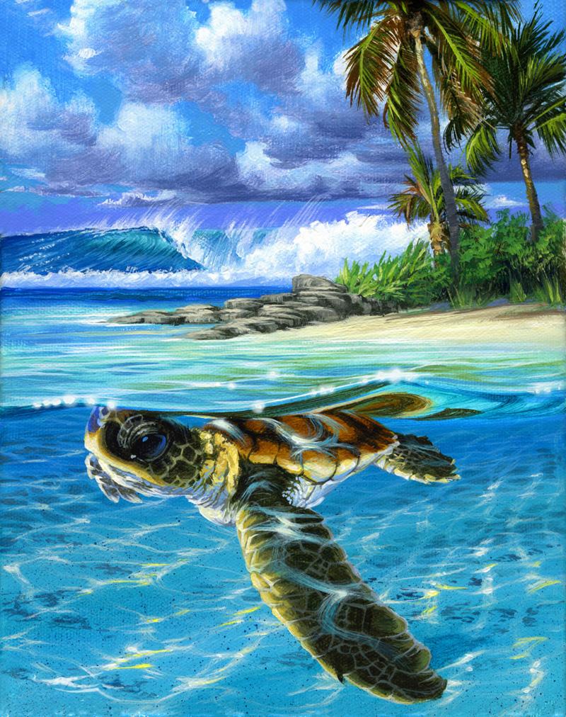 Baby Sea Turtle - Sandy