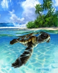 baby sea turtle swimming, surf art painting by Phil Roberts