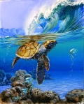 Turtle Duck Dive surf art watercolor painting By Phil Roberts